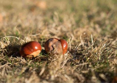 Conkers and other things