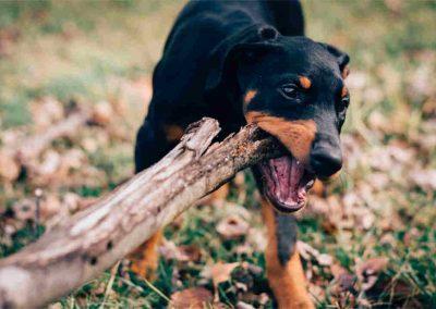 danger of sticks