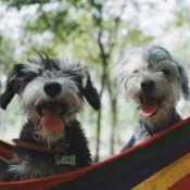dogs in hammock