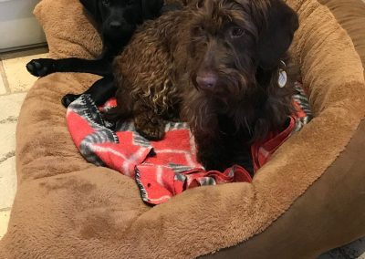 Dogs in a dog-bed