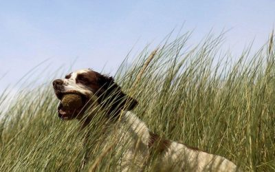 Tips to Make Your Doggy Day Care Experience Stress Free