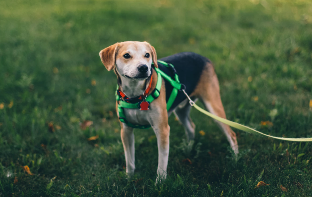 10 Things to Look for When Using a Professional Dog Walker