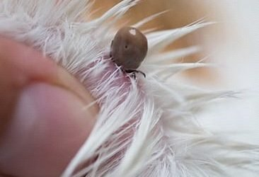 Ticks. Bad for your dog, bad for you!
